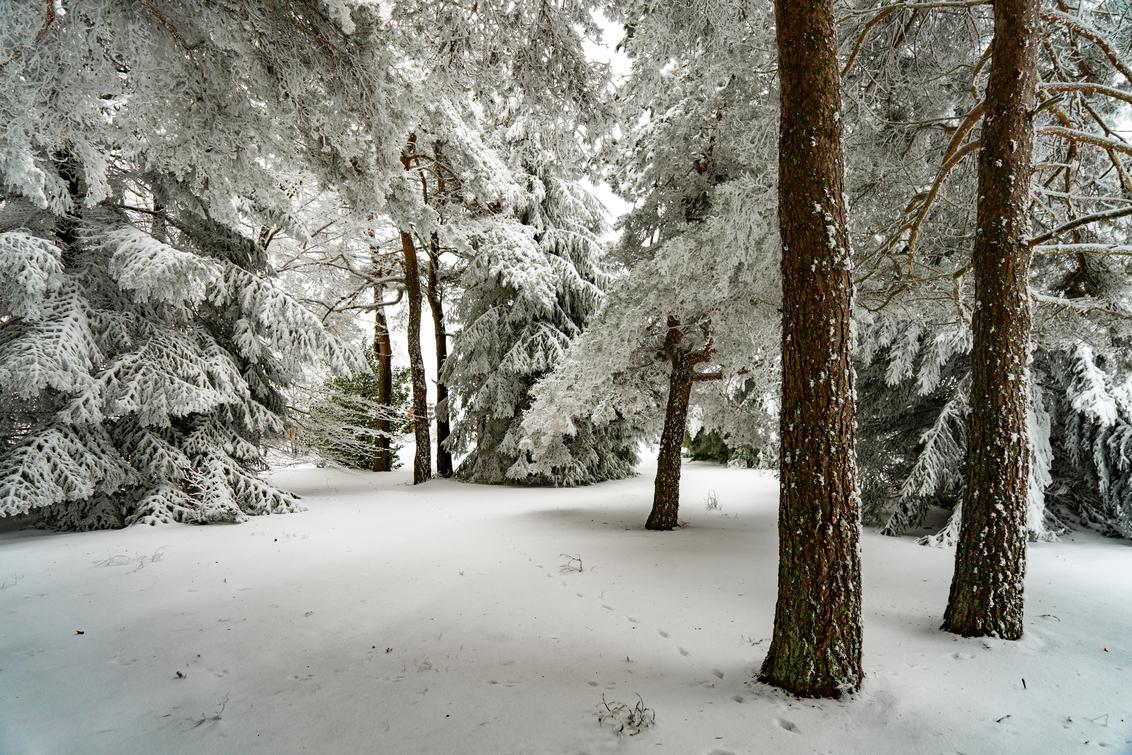 Still wandering in winter - - - foto door EJVH op 27-02-2021 - deze foto bevat: groen, licht, sneeuw, winter, bomen