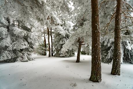 Still wandering in winter