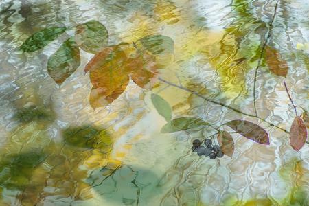 Floating in water - Gemaakt in Photoshop door 2 foto's samen te voegen. - foto door birgitte61 op 06-10-2019 - deze foto bevat: water, natuur, licht, herfst, fantasie, landschap, herfstbladeren, bewerking, photoshop, creatief, dubbele belichting