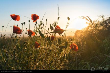 De langste dag - Een mooi zomeravond in de polder van Zuidland - foto door framefotografie op 21-06-2018 - deze foto bevat: zon, natuur, licht, avond, zonsondergang, landschap, klaproos, tegenlicht, klaprozen, polder