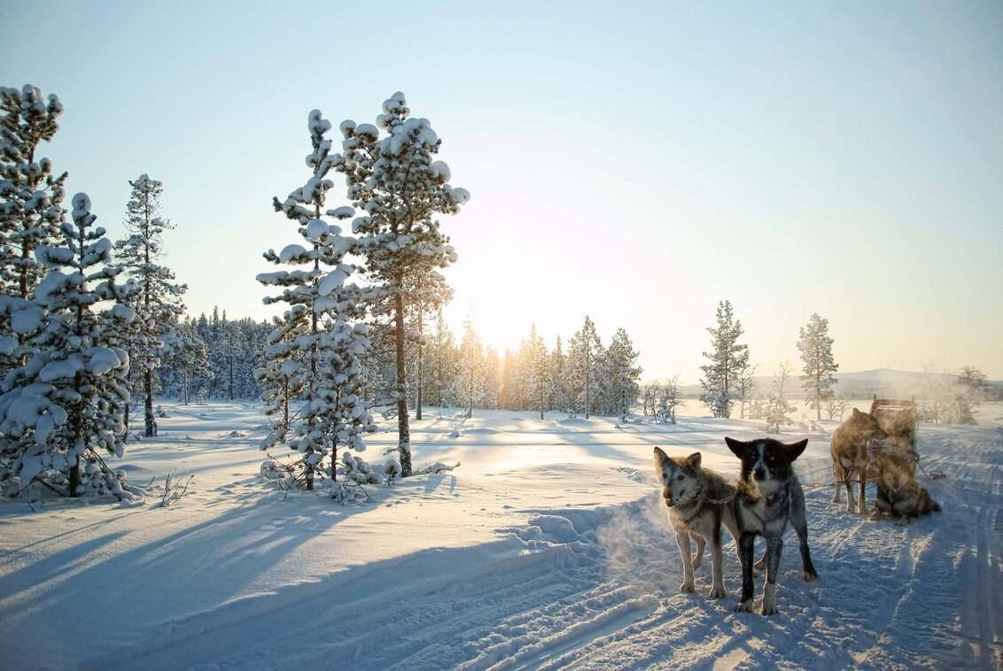 Winterzon - Even uithijgen in de kou na een paar uur rennen door de sneeuw. - foto door marloes_pareren op 12-10-2012 - deze foto bevat: sneeuw, winter, dieren, kou, reisfotografie