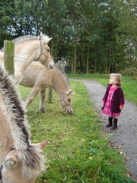 Paardjes in de herfst