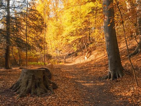 Autumn Leaves - Bedankt voor de fijne reacties bij mijn Paddenstoel collage. - foto door Lilian2010 op 11-12-2020 - deze foto bevat: herfst, bos, bladderen, duin & kruidberg