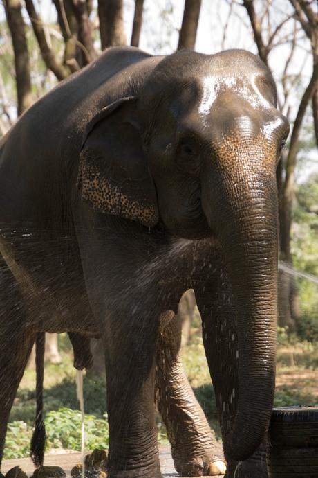 olifantenpark Chiang rai