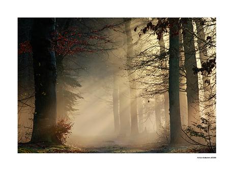 Winter light...