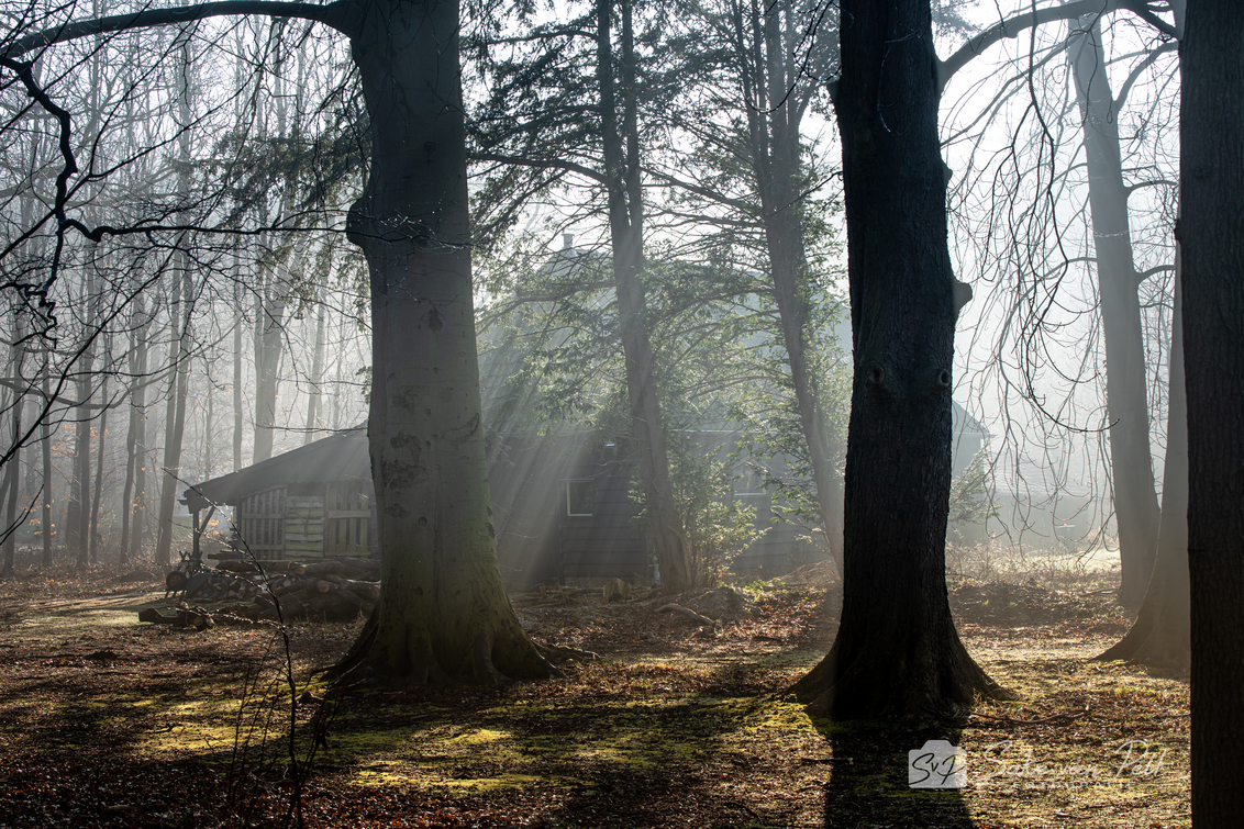 Boshut - Lang heb ik gewacht op deze omstandigheden, maar toen we op zondagochtend wakker werden en ik uit het raam keek zag ik dat de omstandigheden perfect  - foto door Sake-van-Pelt op 01-03-2021 - deze foto bevat: groen, lucht, wolken, zon, boom, ochtendmist, water, natuur, druppel, geel, licht, ochtend, mos, blad, landschap, mist, bos, beuk, nederland, huisje, zonnestralen, huis, hut, horsten, jacobsladder, zonneharp, hutje, beuken, cabine, boshuis, cabin, Boshuisje