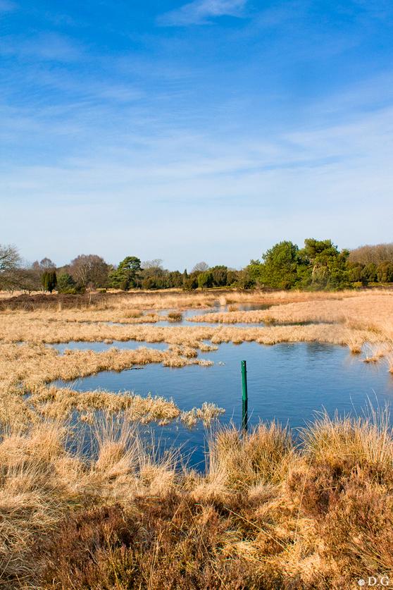 Peaceful - (bekijk de grote versie!)  Aah.. voorjaarsvakantie! Even rust.. Helaas blijven de zachte temperaturen nog even weg.. Maar vandaag zon en blauwe lu - foto door daniel44 op 20-02-2011 - deze foto bevat: lucht, water, natuur, landschap, heide, ven
