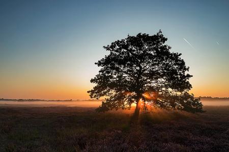Zonneharpen - Eindelijk zonneharpen weten vast te leggen! - foto door daveenrenee op 19-09-2019 - deze foto bevat: lucht, wolken, zon, natuur, licht, landschap, mist, heide, tegenlicht, zonsopkomst, bomen