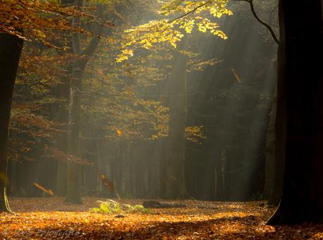 Herfstsfeer met Zonneharp