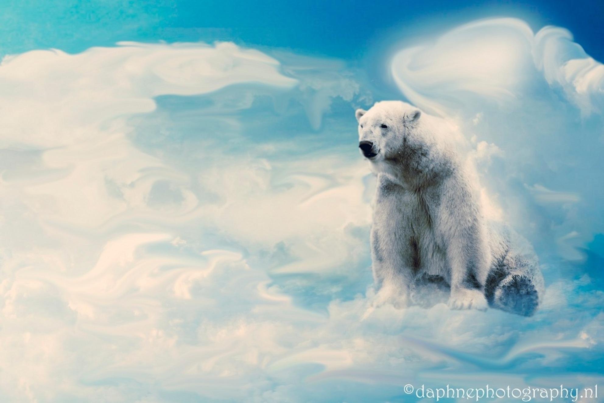 Toch een beetje (hemelse) winter..! - Een ijsbeer uit Blijdorp..... vond hem op deze manier veel leuker... - foto door daphnedus op 09-02-2014 - deze foto bevat: ijsbeer, bewerking