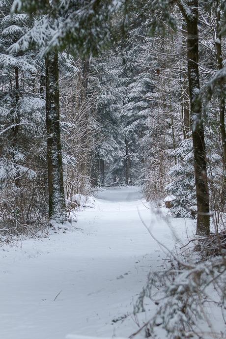 Kuinderbos in winterse sferen