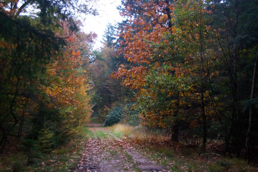 herfstkleuren - Alledaagse natuurfoto waarin de kleuren van het najaar het meest tot hun recht komen. - foto door w.zijlstra10 op 05-11-2011 - deze foto bevat: engbertsdijksvenen, twenterand, westerhaar