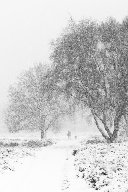 Voor wie denkt dat het nu koud is... - ...denk nog maar even terug aan 10 december vorig jaar... M'n camera overleefde het ternauwernood! - foto door gooifotograaf op 29-10-2018 - deze foto bevat: wit, sneeuw, sneeuwbui, winter, lijnen, hond, doorkijkje, bomen, koud, hei, zwartwit, landscape, ijskoud, contrast, winterfoto, gooi, hilversum, laren, seizoen, seizoenen, neerslag, zwart-wit, zwart wit, mens en dier