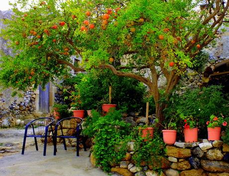 Zitje onder de granaatappelboom