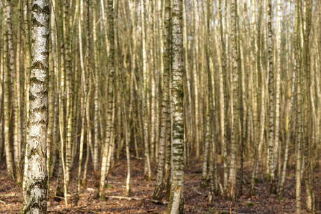 Door de bomen het bos niet meer zien
