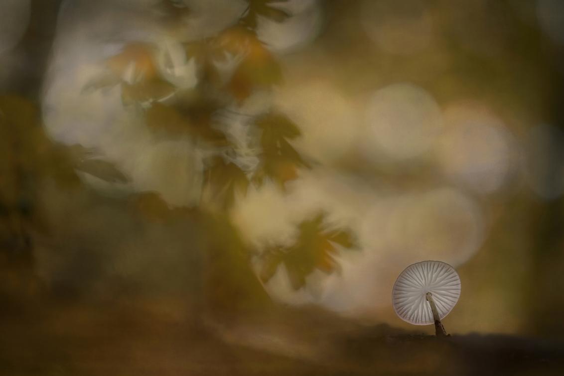 Porseleinzwam - Aan de waterkant lag een tak met een porseleinzwam, één van mijn favoriete paddenstoeltjes. Prachtig om te spelen met licht en de omliggende vegetati - foto door NelTalen op 23-09-2017 - deze foto bevat: paddestoel, herfst, porseleinzwam, dof, bokeh