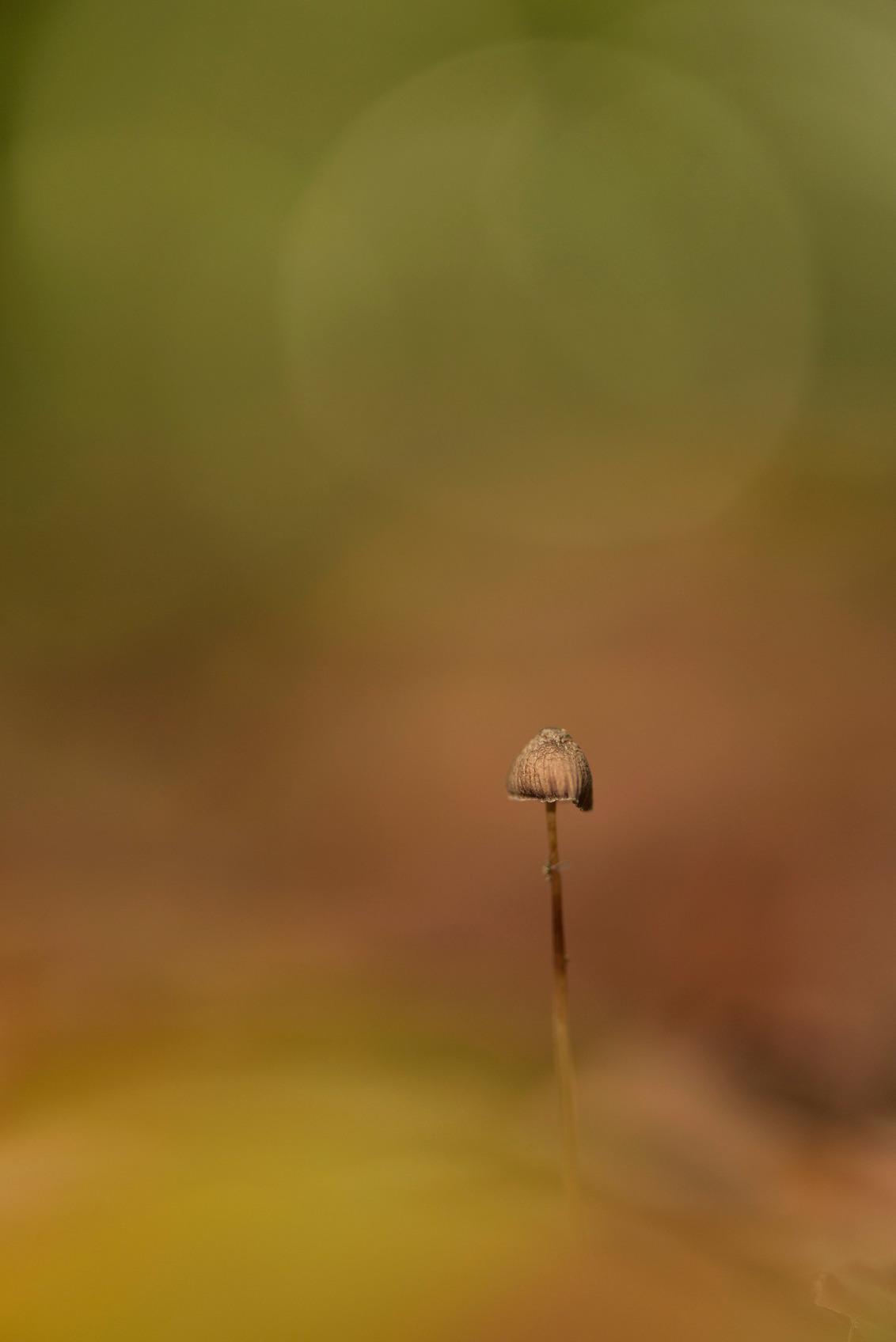 """Fier en trots - bij weer en wind, maar staan blijven zal ik ....  Bedankt voor de fijne reacties op """"Leven na de dood"""". - foto door Amyl op 15-11-2015 - deze foto bevat: groen, macro, natuur, geel, paddestoel, herfst, bos, dof, bokeh, nikon d750"""