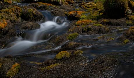 Mossen in de uitloop van de Jaun waterval