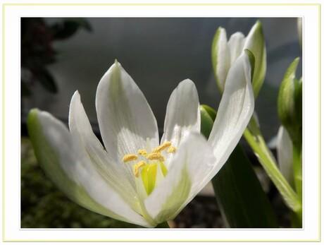 lente wit