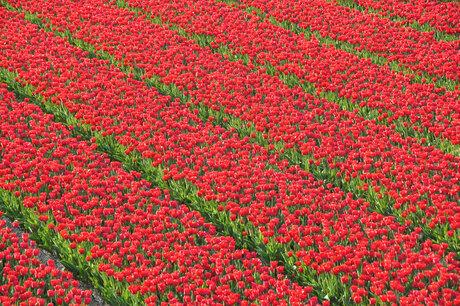 rood met groen
