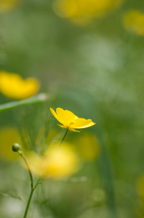 Geel bloemke