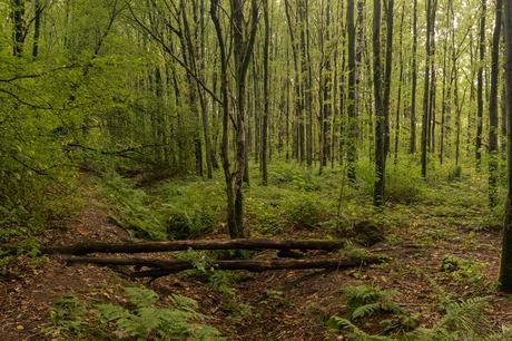 Het bos in gestuurd