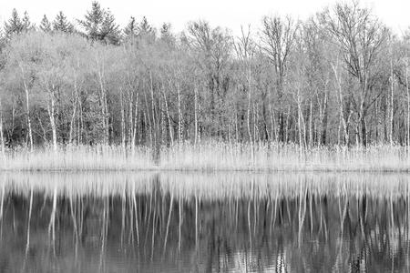 De Berkeboom - - - foto door JolandavanDijk op 25-02-2021 - deze foto bevat: water, winter, spiegeling, landschap, bos, bomen, meer, berkeboom, zwart-wit fotografie