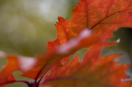 Leaf in full color!