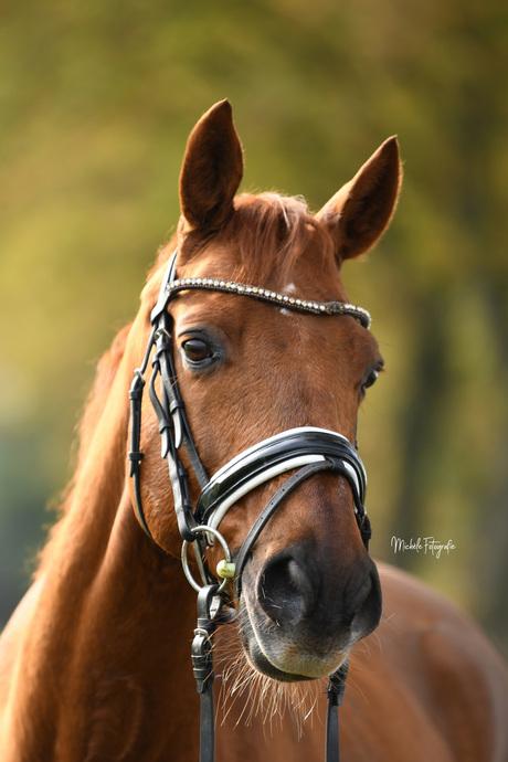 Herfstportret van een paard