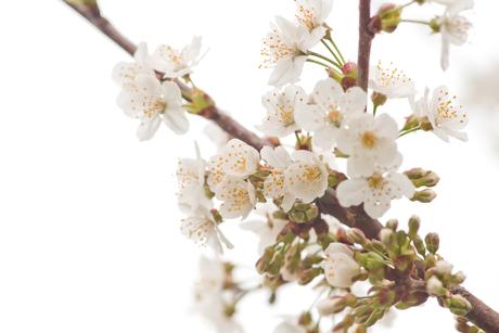 nog meer lente