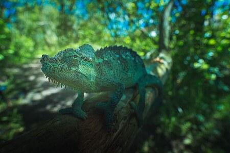 Trioceros Hoehnelli - iso 2000 f16 1/200   Gemaakt met de Laowa 15mm wide angel macro - foto door marcojongsma op 06-05-2020 - deze foto bevat: groen, macro, wit, blauw, zon, natuur, licht, oranje, tuin, tegenlicht, zomer, vlindertuin, kameleon, bokeh