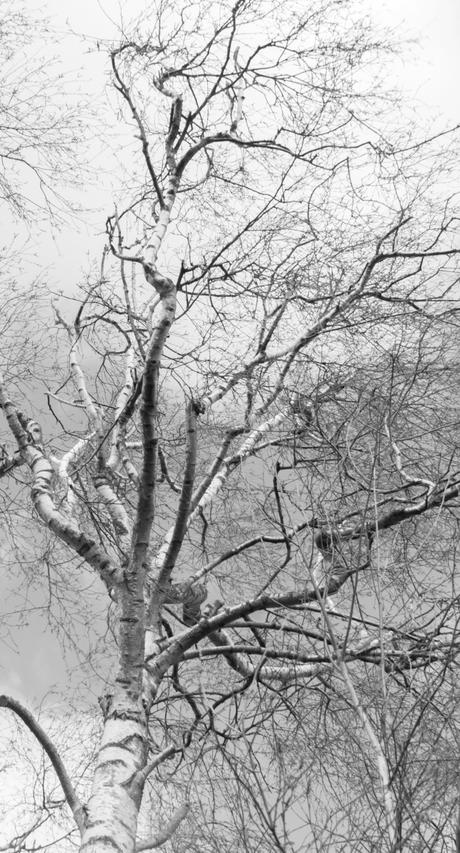 DSC_2434 berkje zwartwit