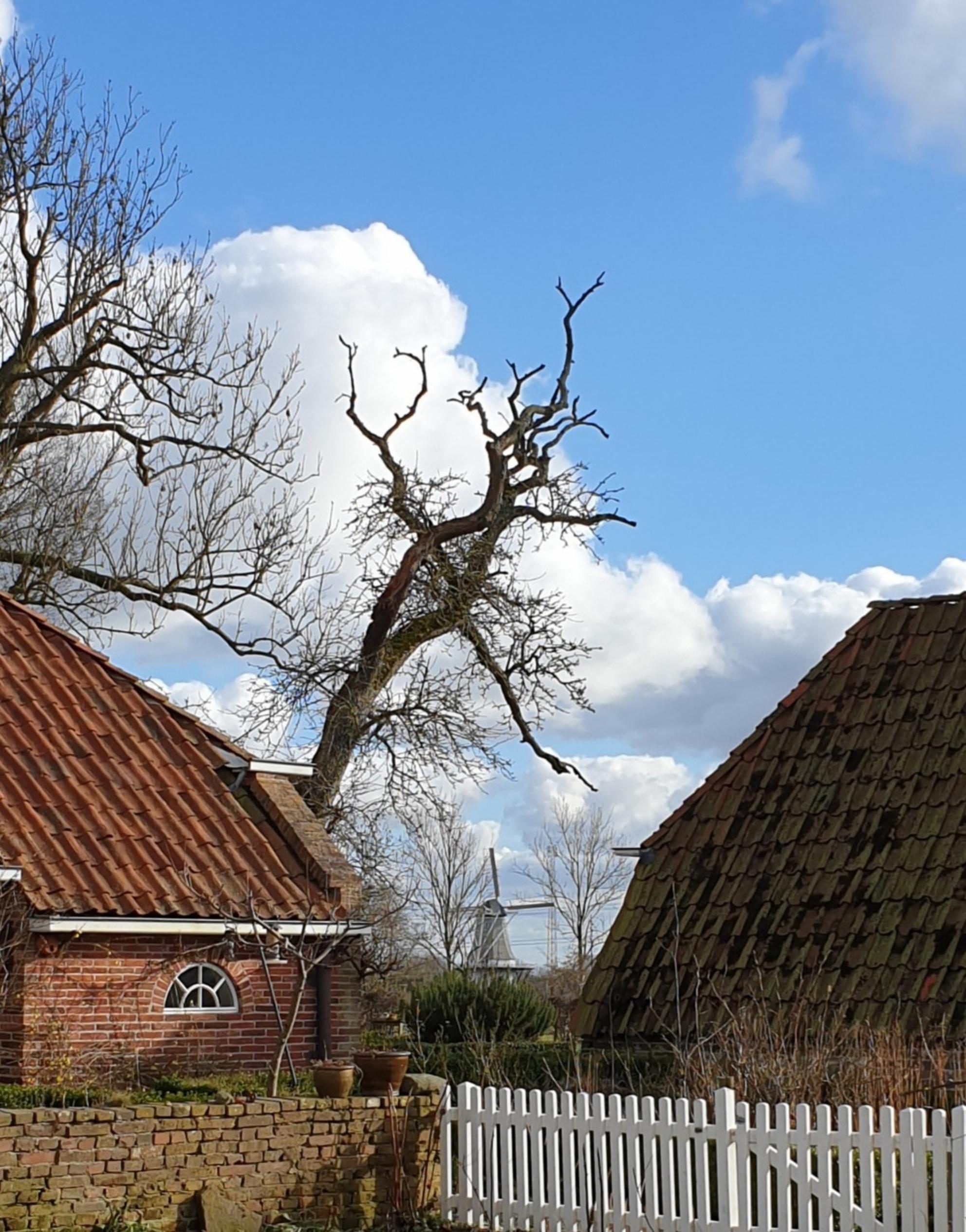 Molen Wetsinge - Vanuit Grootwetsinge de molen in Kleinwetsinge  gr Bets - foto door cgfwg op 07-03-2021 - Deze foto mag gebruikt worden in een Zoom.nl publicatie