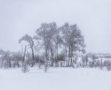 Winter 2021- 3
