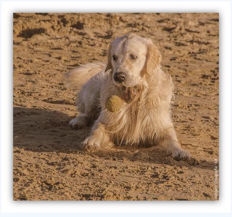 He mijn bal
