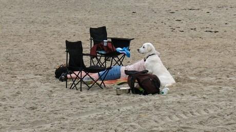 2012-09 Honden strand Zeeland.jpg
