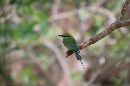 Vogel in Sri Lanka - - - foto door maudberk op 11-10-2018 - deze foto bevat: natuur, dieren, safari, vogel