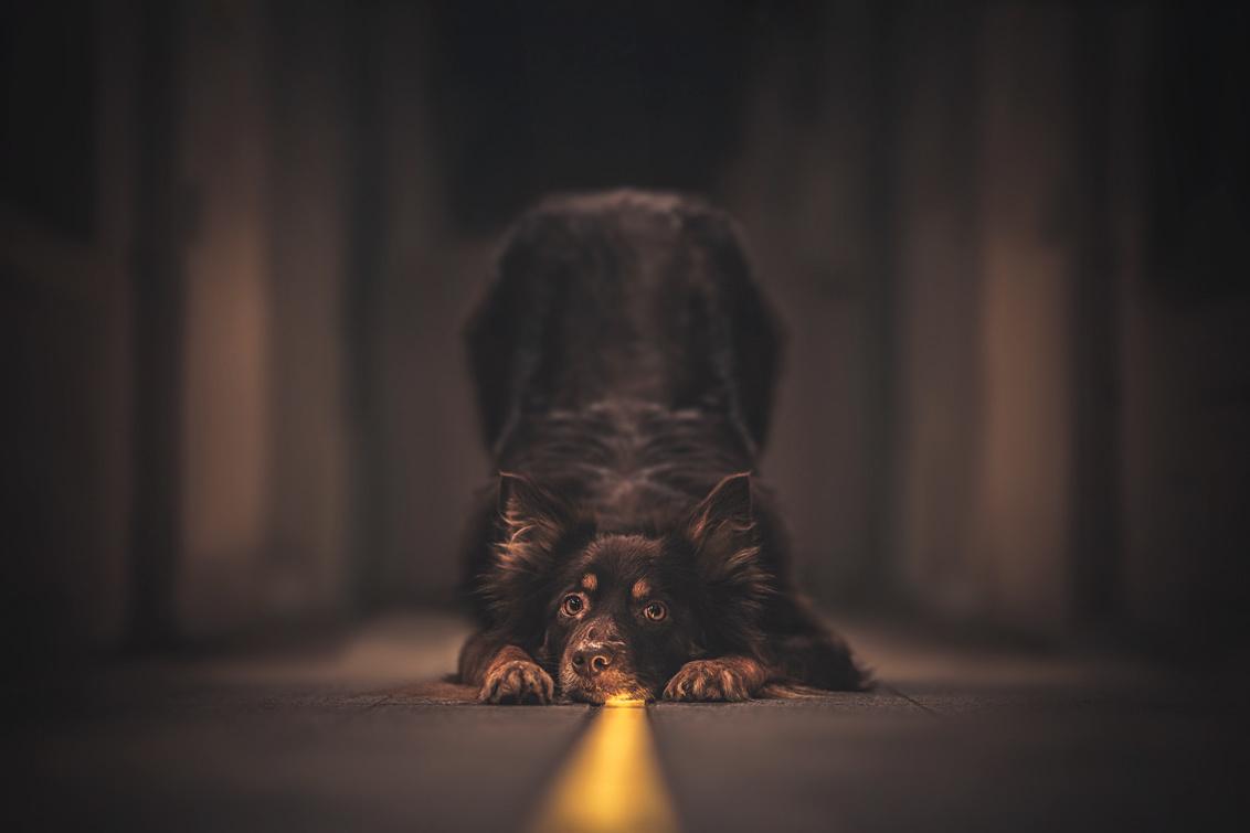 Follow The Line - - - foto door AllNaturePhotography op 05-11-2020 - deze foto bevat: kleuren, donker, geel, portret, huisdier, honden, stad, nikon, pet, nachtfotografie, brugge, huisdierfotografie, buig, hondenfotografie, Border Collie