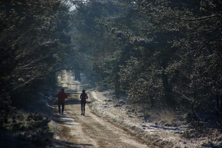 """Trimmers - Dit jaar had ik nog geen wintertafereel geplaatst. Deze is gemaakt in het kroondomein """"Het Loo""""bij Hoog Soeren. - foto door w.zijlstra10 op 24-02-2012 - deze foto bevat: trimmers, het loo, Hoog Soeren"""