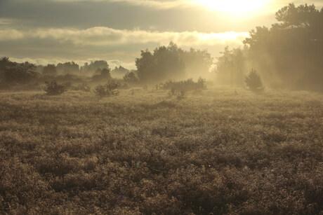 Morgenlicht