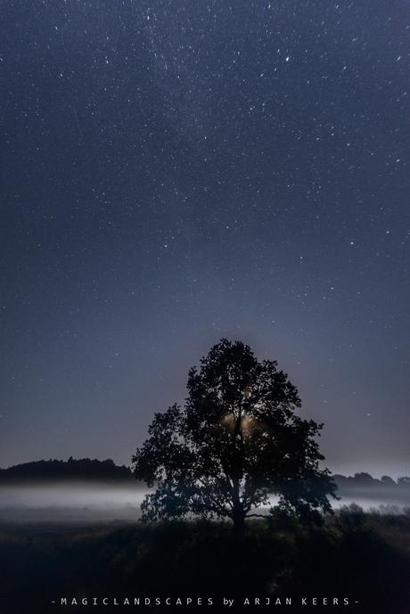moonlight magic..