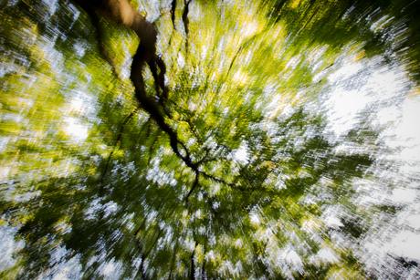 Flashing tree