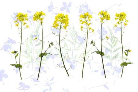 Spring Delight - Nu je wat minder op pad kan en wat meer thuis bent is het leuk om een nieuw macro project te starten - foto door Puck101259 op 21-04-2020 - deze foto bevat: macro, wit, natuur, geel, licht, koolzaad, thuis, flora, brigitte, Wilde bloemen, macro thuis