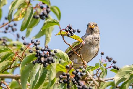 Zomers - - - foto door Monique49 op 12-08-2020 - deze foto bevat: zon, natuur, tuin, mus, dieren, vogel, zomer, nederland