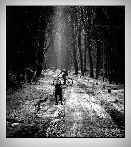 winter in de bossen..............