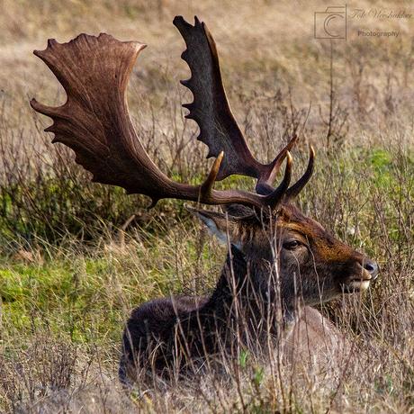 hert in rust