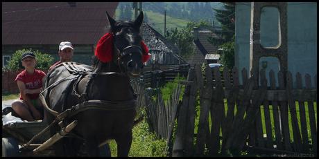 ROMANIA paard en wagen