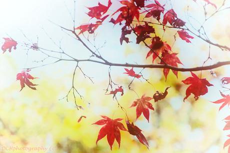 Autumn lightness