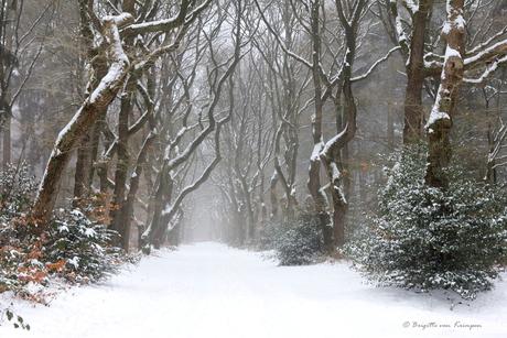 Winter Mood II