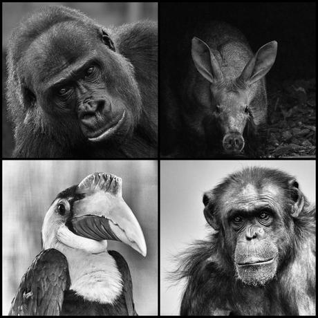 Vierluik dierportretten in zwart-wit